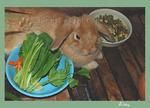 การให้อาหารกระต่าย