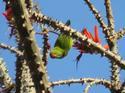 สัตว์โลกน่ารัก,นกหกเล็กปากแดง