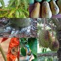 โรคพืชรักษาได้ง่ายนิดเดียว