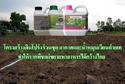 โครงสร้างดินโปร่งร่วนซุย อากาศและน้ำหมุนเวียนถ่ายเท ทำให้รากพืชแผ่ขยายหาอาหารได้กว้างไกล