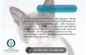 มาทำความรู้จักกับโรคประสาทในน้องแมวไปพร้อมๆ กันนะคะสำหรับใครที่เป็นทาสแมวควรอ่านบทความนี้ แล้วแชร์ให้กับเพื่อนที่คุณรักแมวเช่นกันค่ะ